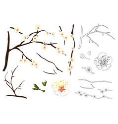 Plum blossom flower outline vector