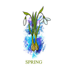 spring greeting card with snowdrop vector image