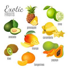 exotic fruits avocado pineapple papaya vector image