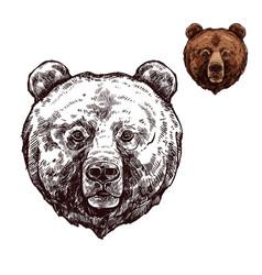 bear or grizzly animal sketch of wild predator vector image vector image