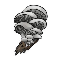edible mushroom flat icon oyster vector image