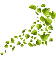 Green leaves isolated on white vector image