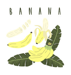 Hand drawn cartoon set of whole sliced banana vector