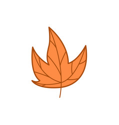 Maple dry brown leaf autumn theme cartoon design vector