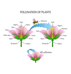 Pollinating plants with insects and self-pollinati vector