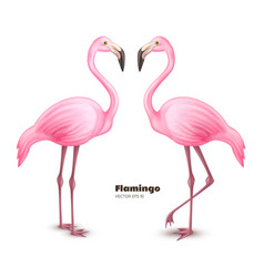 Realistic 3d pink flamingo set vector