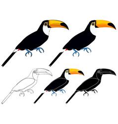 Toco toucan bird in profile view vector