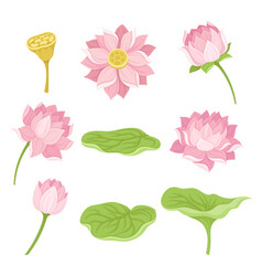Waterlily flower and its parts set isolated vector