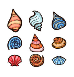 collection of various seashells isolated on white vector image