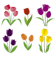 Colored tulips vector