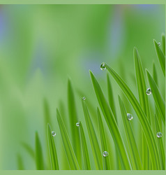 grass in droplets water background a nature vector image