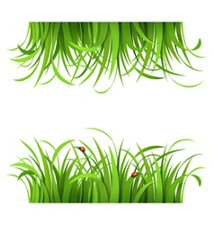 Green grass and ladybirds vector image