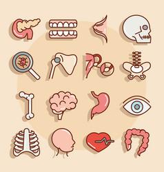 human body anatomy organs health pancreas teeth vector image