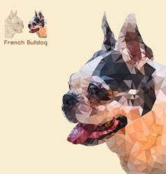 Low poly head french bulldog vector image