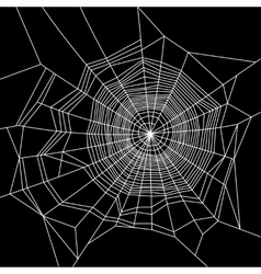 Cobweb White on Black Background vector image