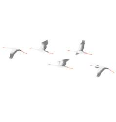 flying stork flock vector image