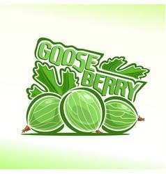 gooseberry still life vector image vector image