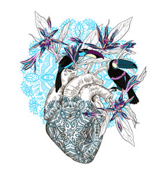 Drawing human anatomical heart with flowers vector