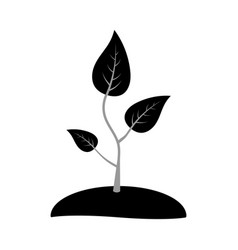 Icon seedlings sprout of a young plant for vector