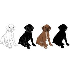 Puppy boxer vector