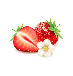 Strawberry and slice isolated on white vector