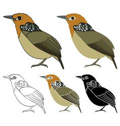 Uirapuru bird in profile view vector