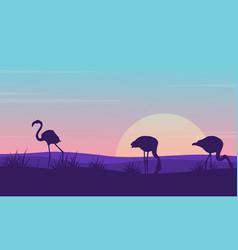 collection of flamingo landscape silhouette design vector image