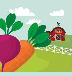 farm fresh vegetables harvest vector image