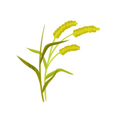 Flat icon of three rye spikelets organic vector