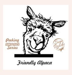 Peeking funny alpaca - surprised alpaca vector