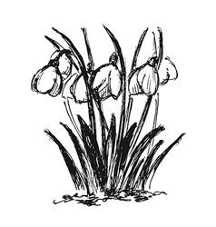 Hand sketch snowdrop vector image