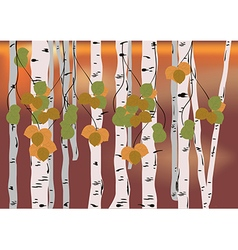 Birch grove vector image