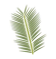 tropical palm leave jungle leaf floral vector image