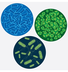 viruses vector image