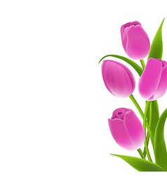Border Of Pink Tulips vector image vector image
