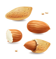 Almond nuts with shell isolated realistic vector