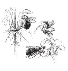 Bees visiting flowers vintage vector