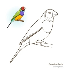 Gouldian finch bird coloring book vector image