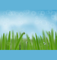 Grass in droplets water background a nature vector