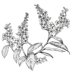 Hand Drawn Bird Cherry Tree Sketch vector
