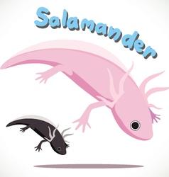 Salamander 2 vector image