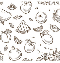 watermelon fruit and apple with leaf sketches vector image