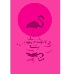 flamingo at sunset or sunrise vector image vector image