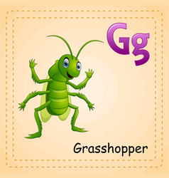 animals alphabet g is for grasshopper vector image