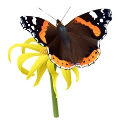 Butterfly on yellow flower isolated vector image