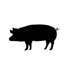 pig shadow on a white backdrop vector image