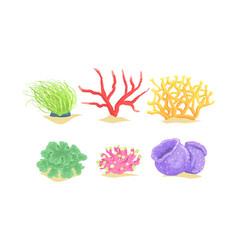 seaweeds collection aquatic marine algae vector image