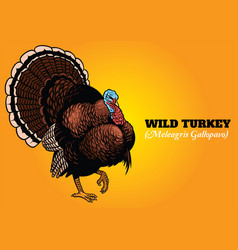 Wild turkey in hand drawing style vector