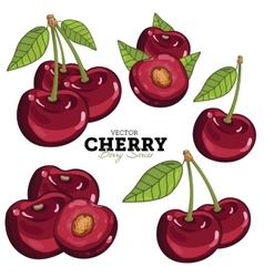 Cherry Set vector image vector image