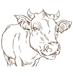 Cute naturalistic cow vector